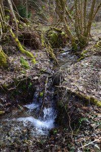 Schönes Bachtal Schastebach bei Naurath/Wald