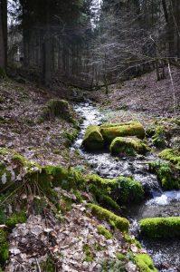 Schönes Bachtal Schastebach bei Naurath/Wald-Hochwald-Nationalparkregion