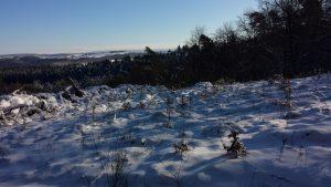 Schöne Aussicht auf den Hunsrück von Naurath/Wald-Hochwald-Nationalparkregion