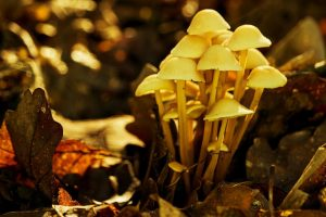 Naurath-Wald-Nationalpark-Region-Natur-Erholung im Hochwald