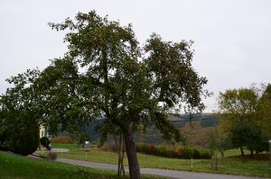 Naurath-Wald, Eindrücke 4 Jahreszeiten, Hochwald, Nationalparkregion Saar-Hunsrück