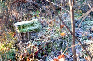 Naurath Wald im Herbst_Hochwald_Nationalparkregion