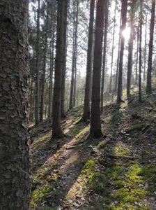 Naurath/Wald, Hochwald, Nationalparkregion, Natur erleben, 5-Täler-Tour, Traumschleife