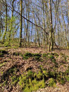 Traumschleife 5-Täler-Tour Naurath/Wald Nationalparkregion Hochwald Saar-Hunsrück-Steig
